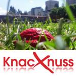 Knacknuss – 07.06.2013